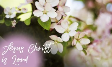 """Photo of blossoms with the words, """"Jesus Christ is Lord."""""""