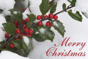 "The words, ""Merry Christmas"" with a photo of holly with red berries."