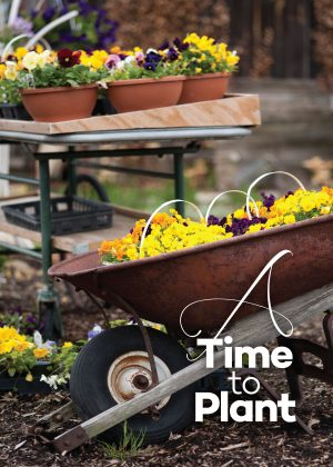 "Photo of a wheelbarrow and many plants in pots with the words, ""Time to Plant."""