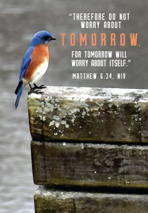 """Photo of a bird with the words, """"Therefore, do not worry about tomorrow for tomorrow will worry about itself."""""""