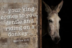 "Photo of the face of a donkey and the words, ""your king comes to you gentle and riding on a donkey."""