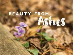"The words, ""Beauty from Ashes"" in a photo of small purple blossom."
