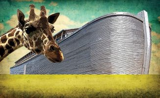 Ark, giraffe and green field and blue sky