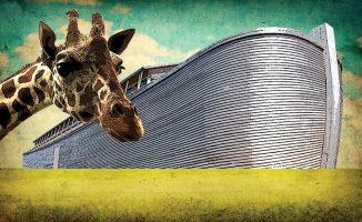 Ark, giraffe and green field and blue sky